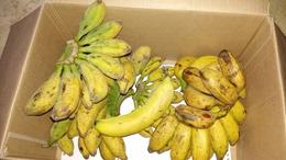 (小米蕉香蕉芭蕉 )的尾蕉随机发货 偏小个8斤圆通包邮 坏包赔