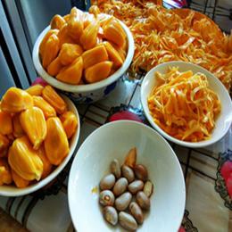 20斤现摘现发当季包邮海南三亚特产青皮干苞新鲜菠萝蜜非红肉40