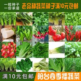 非转基因老品种阳台四季蔬菜小白菜小青菜小香葱油麦空心菜种子