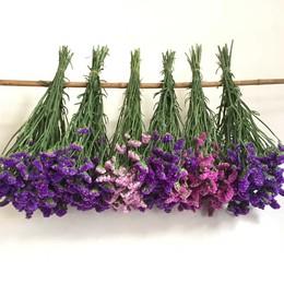 勿忘我干花花束满天星水晶草情人草天然真花装饰花束论斤包邮50cm