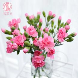 花里家 送母亲感恩礼物鲜花 同城速递多头康乃馨家庭水养花卉花束