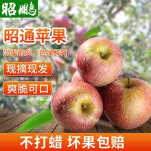 云南昭通丑苹果新鲜水果冰糖心红富士脆苹果丑苹果现摘现发10斤