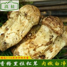 松茸新鲜野生菌香格里拉松茸菌云南特产鲜松茸蘑菇5-7cm松茸菌