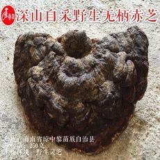 精选特级野生无柄赤芝、紫芝海南岛纯天然野生灵芝250g可切片磨粉
