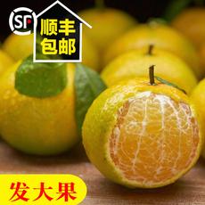 德庆皇帝柑 新鲜水果贡柑 现摘当季橘子时令桔子五斤大果顺丰发货