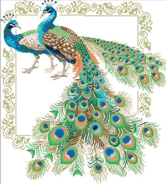 十字绣图纸(电子版含线量dmc线号)-动物-情侣孔雀
