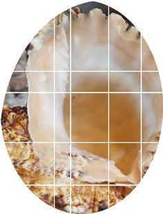 石号螺金口大蛙螺海螺贝壳海星大海螺天然号角包邮可吹的螺号