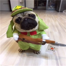 Dogs, dogs, cats, ghosts, police nurses, pirate knights, doctor pumpkins, funny ideas, funny pet clothes
