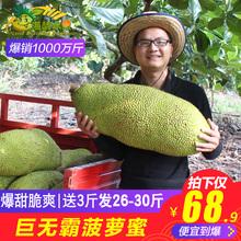 新鲜水果三亚当季大树波罗爆甜 包邮 海南巨无霸菠萝蜜26 30斤