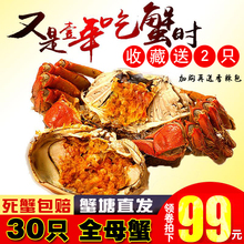 抢30只全母蟹洪泽湖六月黄大闸蟹鲜活螃蟹鲜活香辣蟹河蟹海鲜水产