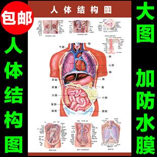 人体骨骼内脏示意图_人体结构示意固_人体结构图_人体内部结构_人体器官结构图 - www ...
