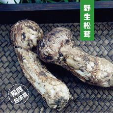 野生新鲜松茸 云南香格里拉5-7cm 500g 一级未开伞
