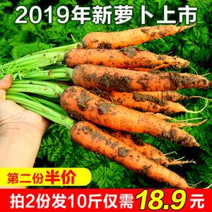 新鲜胡萝卜5斤装 红萝卜农家新鲜<span class=H>水果</span>蔬菜原生态不水洗2500g