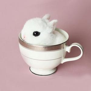 <span class=H>宠物</span>兔子侏儒兔活体迷你 小型海棠兔宝宝凤眼西施兔茶杯兔长不大