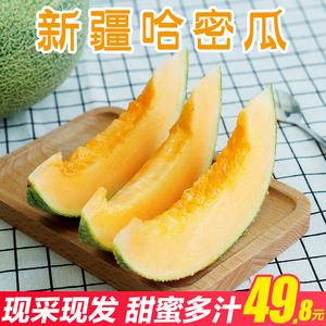 【甘福园】新疆吐鲁番<span class=H>哈密瓜</span> 新鲜当季水果6-7斤西州蜜批发包邮