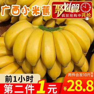 【第二件1元 两件共发带箱10斤】广西小米蕉<span class=H>水果</span>新鲜banana香蕉