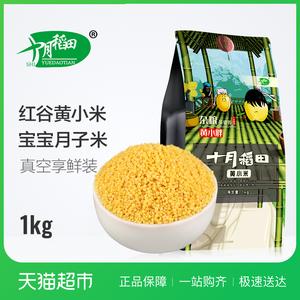 十月稻田黄小米1kg红谷米五谷杂粮<span class=H>粗粮</span>月子米宝宝米