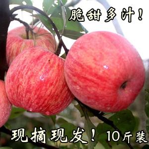 山西红富士<span class=H>苹果</span>新鲜水果农家自种一箱10斤装当季冰糖心脆甜丑<span class=H>苹果</span>