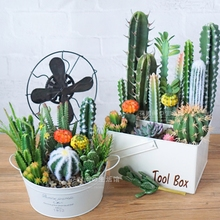 Wholesale of Potted ins Home Decoration Ornaments