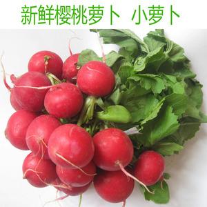 新鲜蔬菜 樱桃萝卜 萝卜<span class=H>水果</span> 500g/份 Raphanus 沙拉配菜 小萝卜