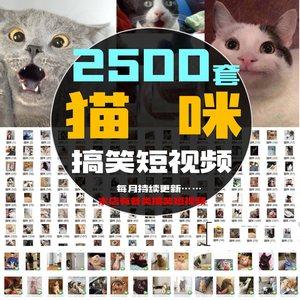 猫咪小猫爆笑动物宠物 自媒体搞笑无水印短视频朋友圈抖音