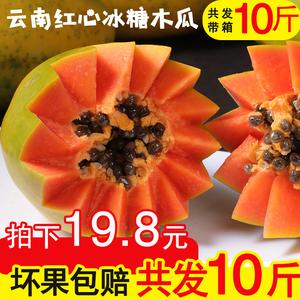 云南红心木瓜当季水果带箱10斤新鲜包邮应季云南牛奶冰糖心青木瓜