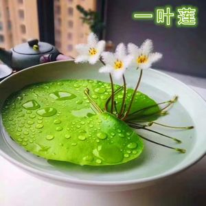 水生植物室内 <span class=H>水培</span>花玻璃器皿盆栽水养花卉水养睡莲冬季莲花易活