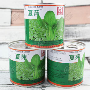 夏萍/夏欣青梗菜种子四季播小油菜耐热蔬菜青菜温夏季上海青种籽