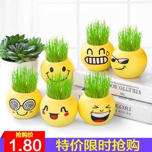草头娃娃微景观植物种子桌面绿植种植迷你表情小草负离子小盆栽