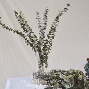 天然尤加利<span class=H>干花</span> 风干无染色 真花植物风干 北欧风天居家装饰插花